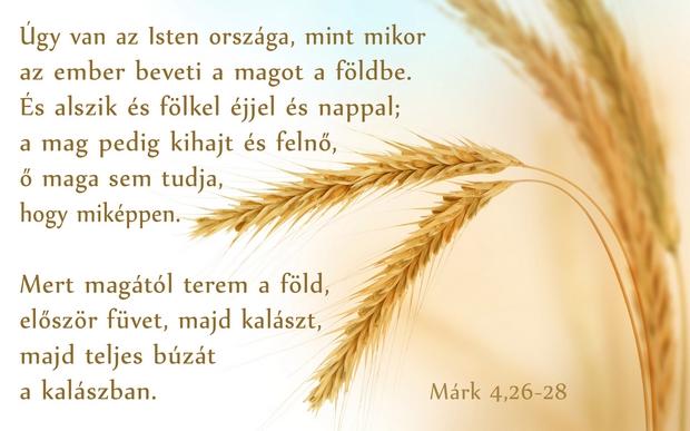Márk 4,26-28