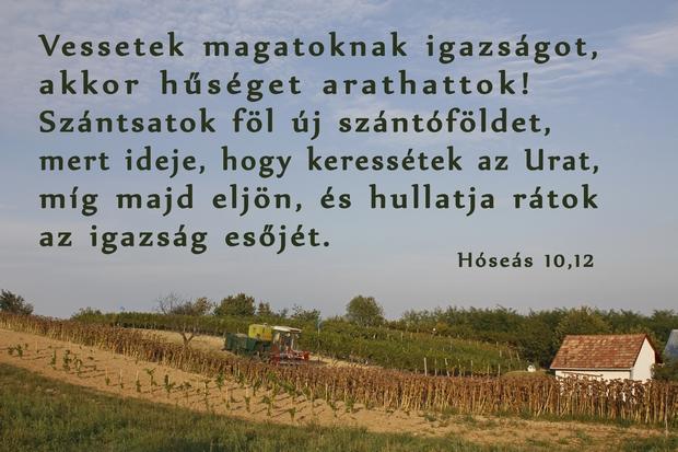 Hóseás 10,12