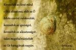 Sofóniás próféta könyve 2,3