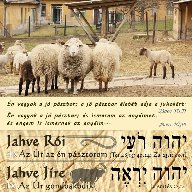 A juhok ismerik pásztoruk hangját és követik őt.